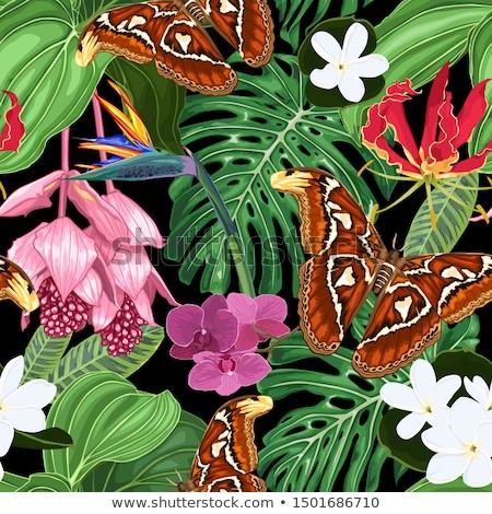 большой · бабочка · филиала · саду · облаке · лес - Сток-фото © rhamm