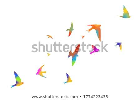 pássaro · artístico · projeto · natureza · arte · assinar - foto stock © akhilesh