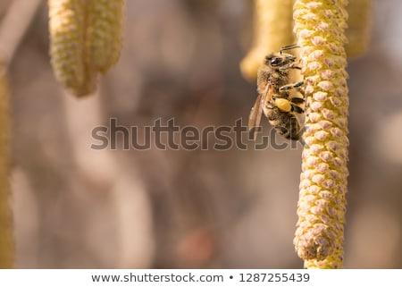 corkscrew shrub kittens Stock photo © thomaseder