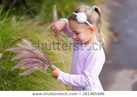 Little butterflies on a wheat stalk Stock photo © Anettphoto