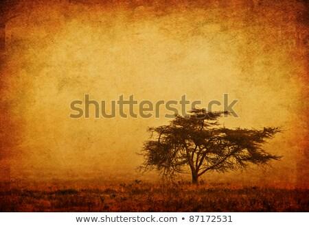 Solitario árbol sepia paisaje puesta de sol naturaleza Foto stock © tarczas