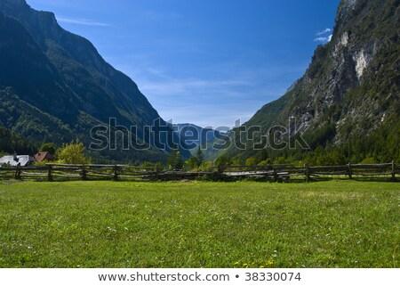 Hegyek falu felső Szlovénia fa természet Stock fotó © joyr