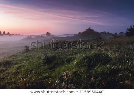 Zonsondergang veld Denemarken najaar landschap Stockfoto © Arrxxx