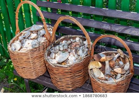 three fresh mushrooms standing stock photo © oleksandro