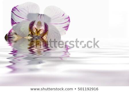 Rózsaszín orchidea levél háttér ajándék fürdő Stock fotó © slunicko