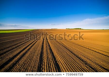 mezőgazdasági · mező · föld · föld · tavasz · kész - stock fotó © fesus