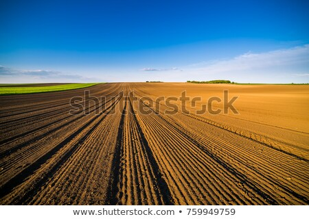 Arable land Stock photo © Fesus