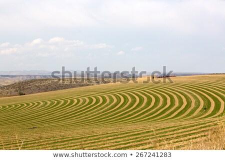 Farm with contoured planting for pivot irrigation Stock photo © ozgur