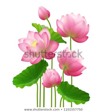lótuszvirág · csoport · rózsaszín · vízcseppek · virág · zöld - stock fotó © smithore