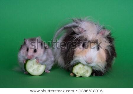 Baby Hamster Tierarzt Antibiotika Wasser mum Stock foto © ndjohnston