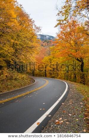 Herfstkleuren berg skyline drive park Virginia Stockfoto © wildnerdpix