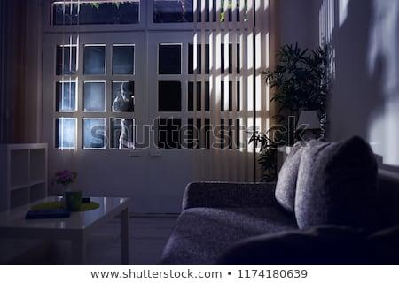 Home burglar Stock photo © fotoedu