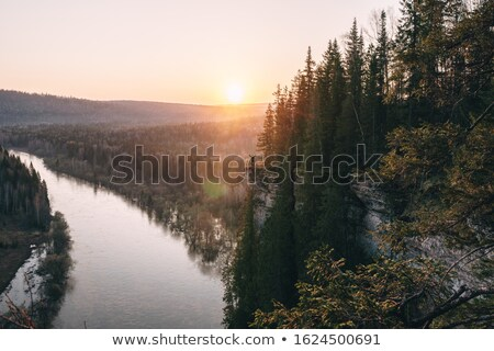 sol · floresta · nevoeiro · árvore · estrada · luz - foto stock © kotenko