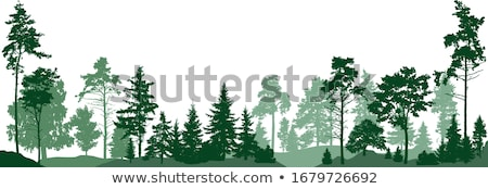 Set of deciduous trees stock photo © orensila