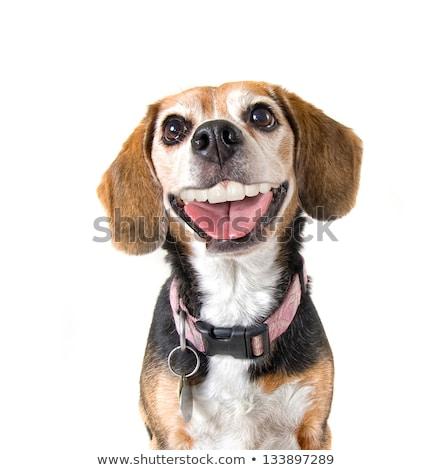 Stock fotó: Dog With A Big Grin