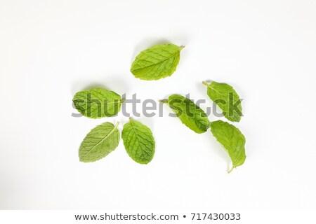 свежие · мята · листьев · мята · продовольствие · лист - Сток-фото © vinodpillai
