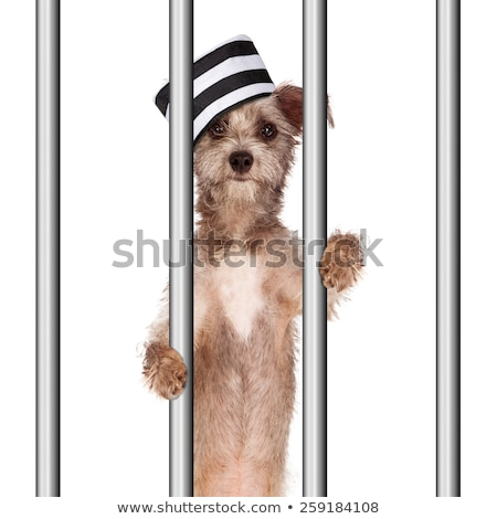Funny prisoner in prison concept Stock photo © Elnur