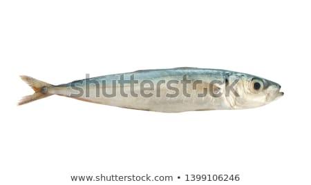 魚 焼き 食品 釣り シーフード ストックフォト © drobacphoto