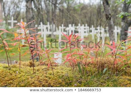 solucan · yaprak · görüntü · çiçek · bahar · bahçe - stok fotoğraf © photofreak