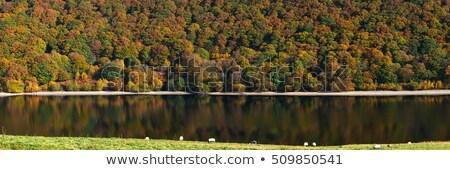 Pióro zbiornik jesienią drzewo kolory panorama Zdjęcia stock © latent