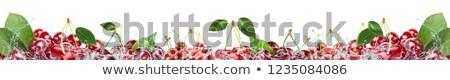 cerejas · tiro · fruto · vermelho - foto stock © rtimages
