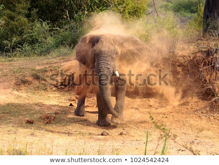afrika · fil · toz · çamur · kapalı · park - stok fotoğraf © brianguest