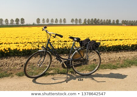 голландский пейзаж велосипедов цветок красочный типичный Сток-фото © ivonnewierink