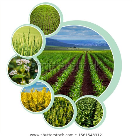Stock photo: Soybean farming in agriculture photo collage