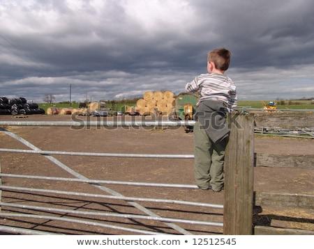 Fiatal srác mászik széna gyermek jókedv szín Stock fotó © IS2