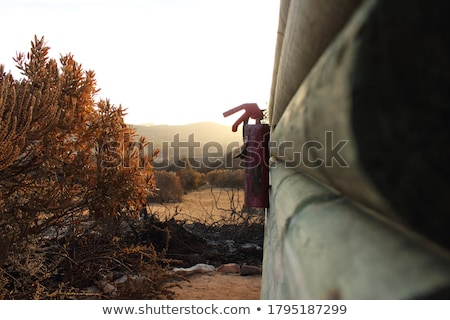 Arbusto fogo país cidade árvore grama Foto stock © artistrobd