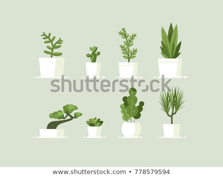 green tree in pot icon vector illustration stock photo © robuart