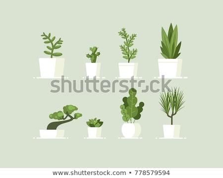 Photo stock: Arbre · vert · pot · icône · léger · gris