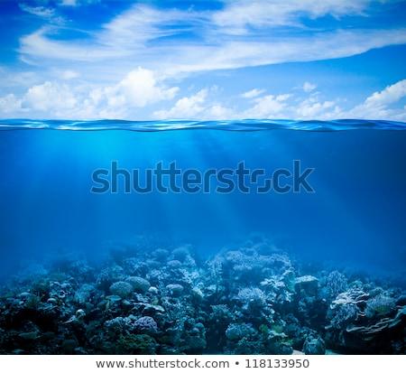 Trópusi kilátás vízalatti tengeralattjáró íj tenger Stock fotó © lunamarina