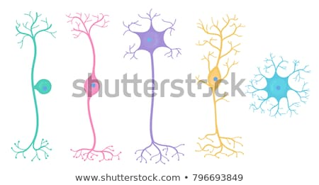 Foto stock: A Set Of Human Nerve Cell