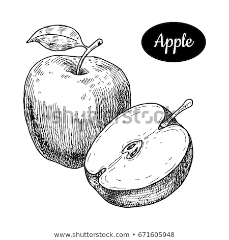 green vectorized ink sketch of apple illustration stock photo © cidepix