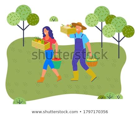 Landbouwer peer houten banner illustratie man Stockfoto © colematt