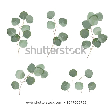 Eucaliptus Branches Save the Date Card Template Stock photo © ivaleksa