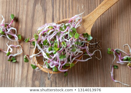 Pink radish sprouts on a wooden spoon, top view Stock photo © madeleine_steinbach