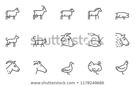 Lam schapen ontwerp boerderijdieren zijaanzicht profiel Stockfoto © FoxysGraphic