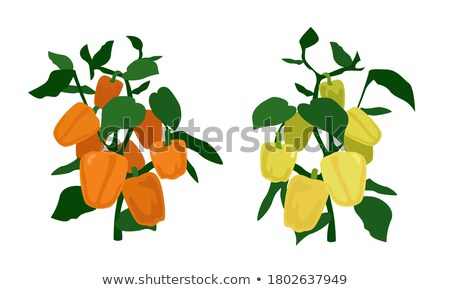 ecological vegetables gardening vegetable garden vector natural product icons isolated flat cartoo stock photo © pikepicture