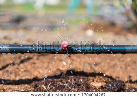 Nawadnianie wyposażenie dziedzinie wiosną uprawiany Zdjęcia stock © simazoran