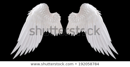 Witte veren geïsoleerd object valentijnsdag Stockfoto © robuart