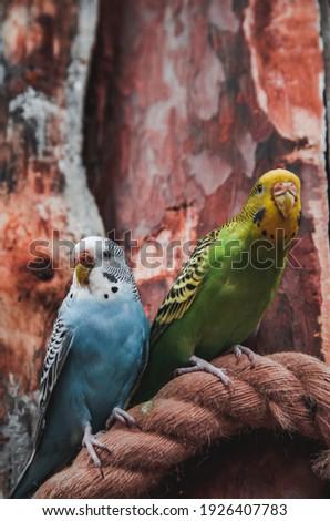 cute · vogel · huizen · vector · voorjaar - stockfoto © lady-luck