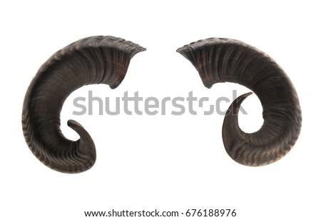 Chèvre cornue Photo stock © Elisanth
