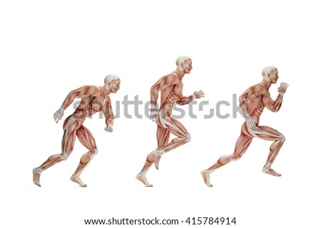 Stock photo: Running cycle. Anatomical illustration. Isolated. Contains clipp