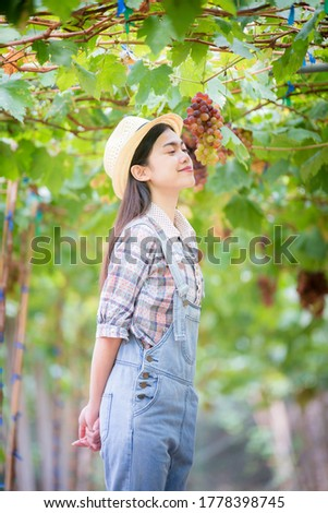 Giovani bella donna raccolta uve vigneto Foto d'archivio © Yatsenko