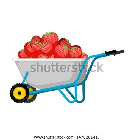 Talicska eper piros bogyó kert nagy Stock fotó © popaukropa