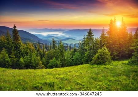 Fantastic forest glowing by sunlight. Location: Carpathian, Ukra Stock photo © Leonidtit