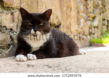 Fluffy black-haired cat sitting and looking sadly isolated on wh Stock photo © AlisLuch