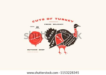 Cięcia Turcja schemat rzeźnik plakat sklep Zdjęcia stock © MarySan